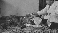 Vladimir Demikhov Ve Çift Başlı Köpek