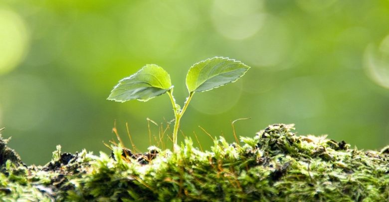 bitkisel hormonlar