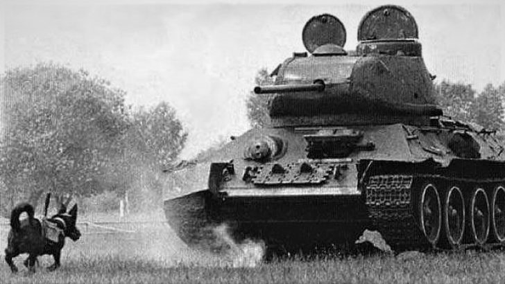 Tarihte Kullanılan İlk Tanksavar Köpekler