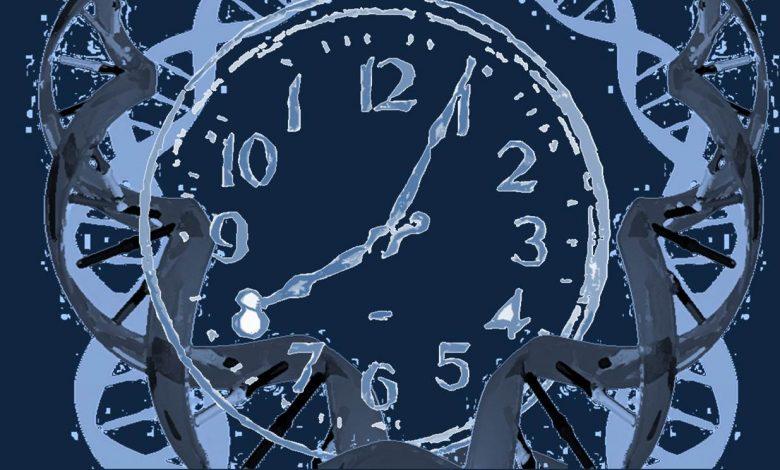 moleküler saat