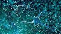 Amiyotrofik Lateral Skleroz (ALS) Nedir?