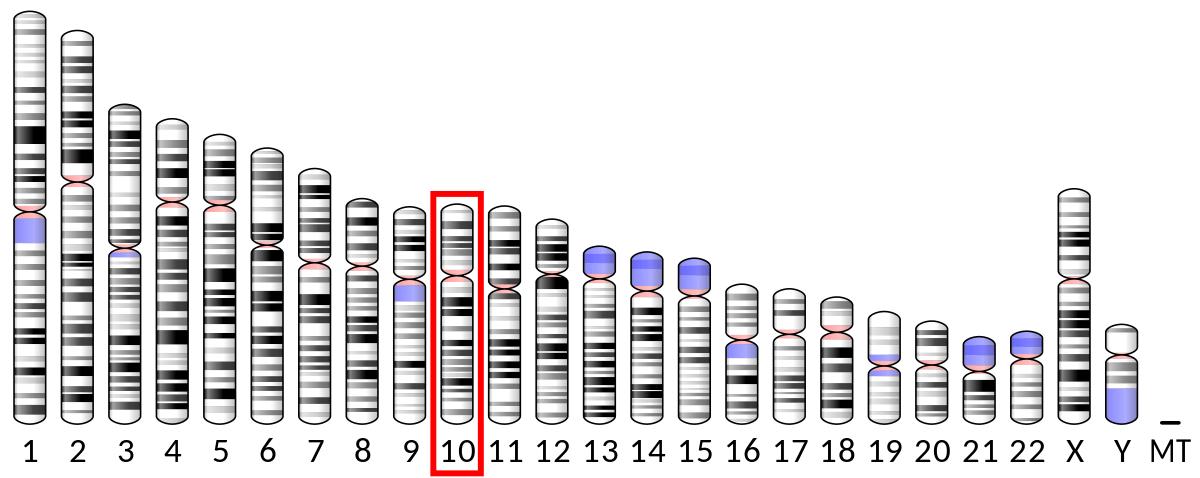 sirtuin-genis-1