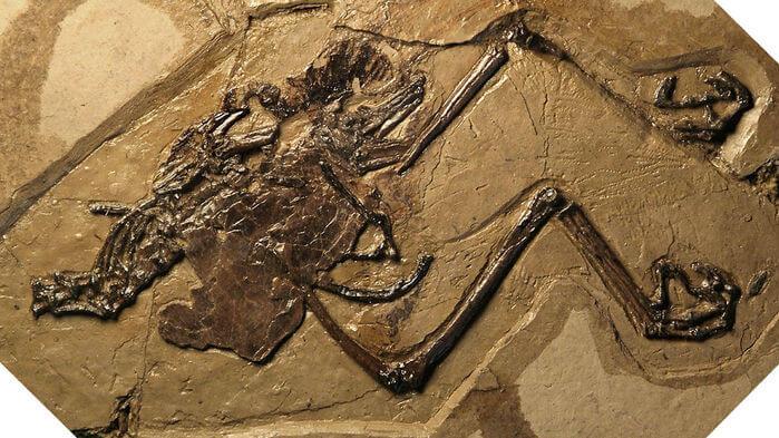 kuş fosili