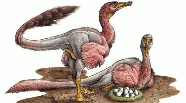 kuş fosilinde yumurta bulundu