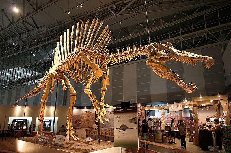 Spinosaurus iskelet