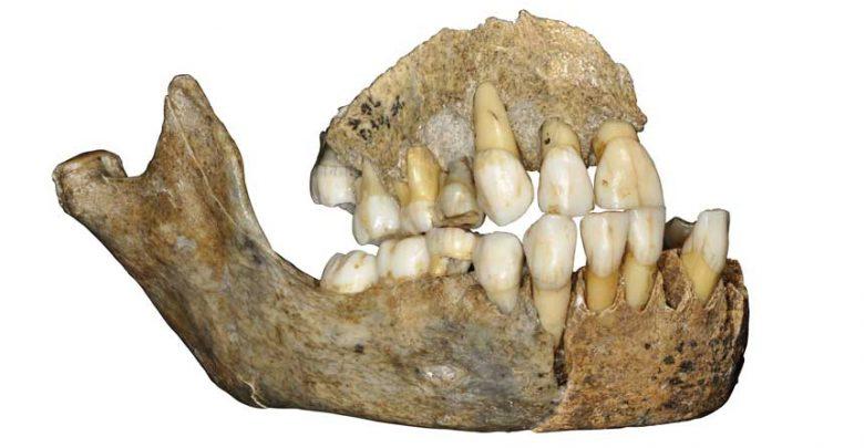 Çene Fosili