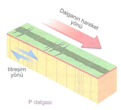 P dalgası