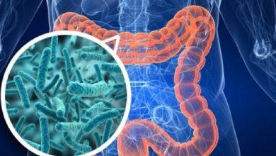 Photo of Mikrobiyota Düzensizliği