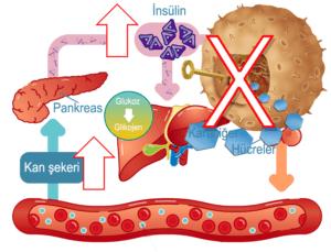 Diastolik kan basıncı nedir