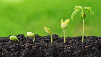 Photo of Bitkilerde Büyüme ve Hareket