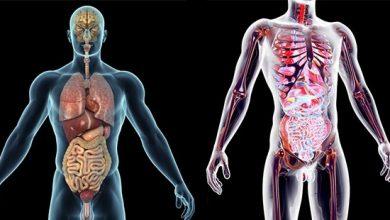 Photo of Vücudumuzun En Büyük Organı Hangisidir?