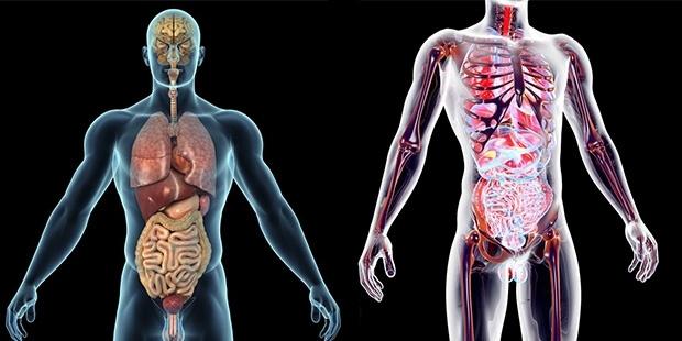 Vücudumuzun En Büyük Organı