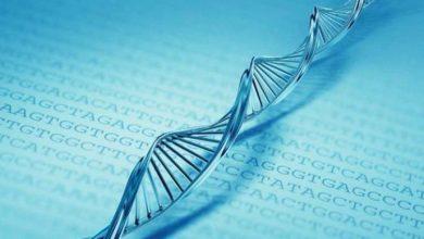 Photo of Genetik Bilgi Aktarım Yolları Nelerdir?