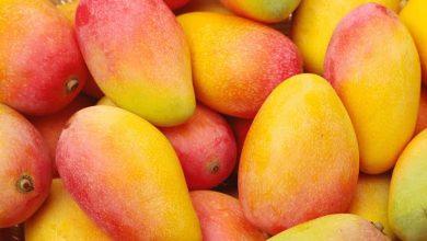 Photo of Meyvelerin Kraliçesi: Mango