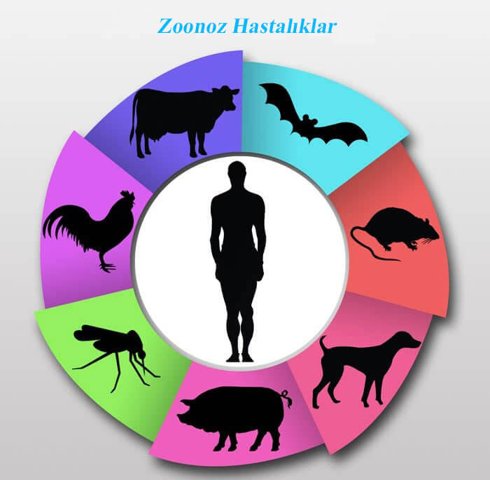 Zoonoz Hastalıklar