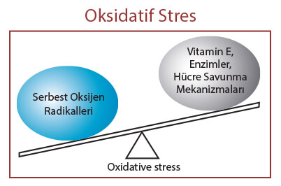 Oksidatif Stres Nasıl Artar