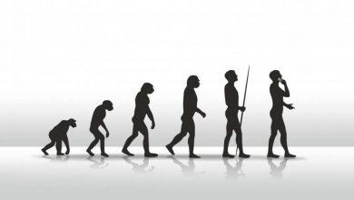 Homo sapiensin evrimi