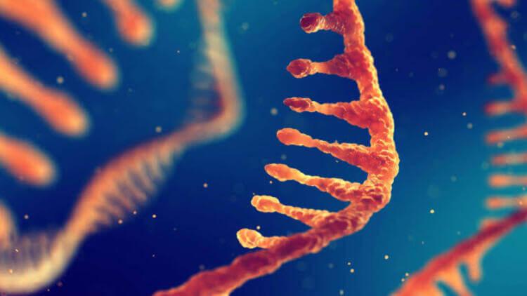 Piwi RNA