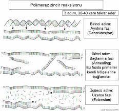 Genetik Tanı Yöntemler